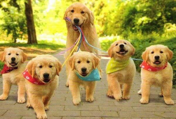 Как можно заработать на выгуле собак за деньги