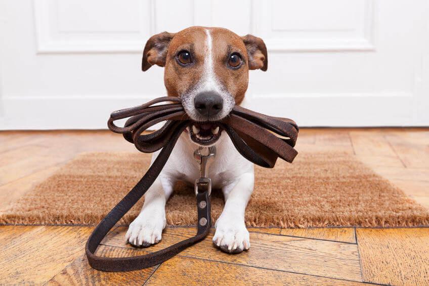 Организация бизнеса на выгуле собак