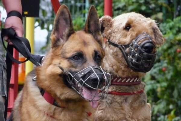 Особенности бизнес-услуги по выгулу собак