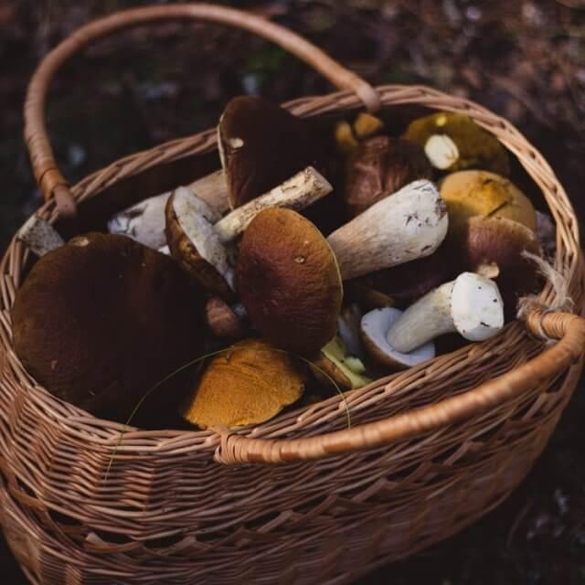 Плюсы и минусы грибного бизнеса