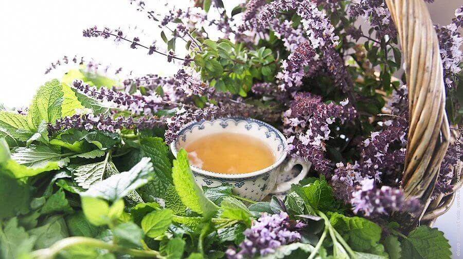 Сбор трав и ягод для чая